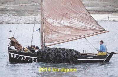 2014 les algues